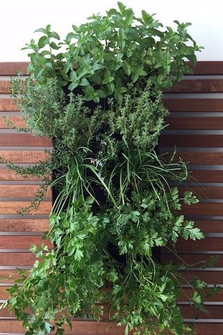 Luscious Living Spaces Vertical Herb Wall Garden Living Wall