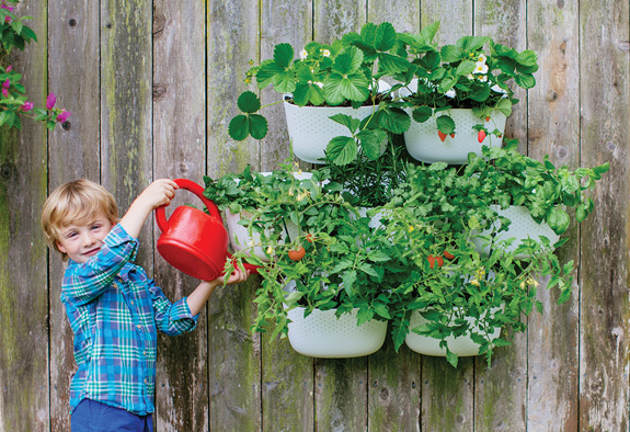 Living Walls Made Easy Trade Tips From Woolly Pocket